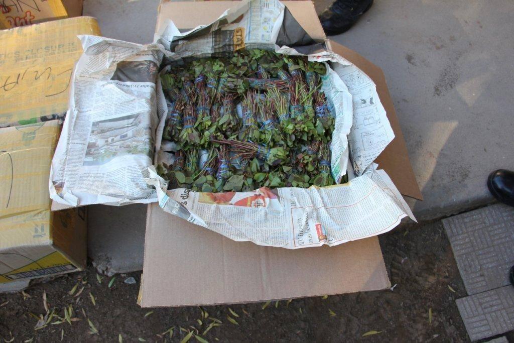Drug trafficking arrest in Western Cape